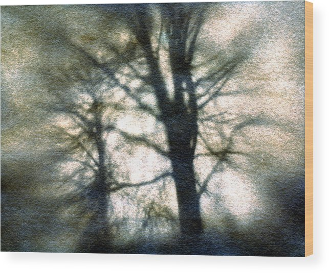 Trres Wood Print featuring the photograph Original Tree by Diana Ludwig