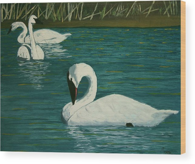 Swans Wood Print featuring the painting Preening Swans by Robert Tower