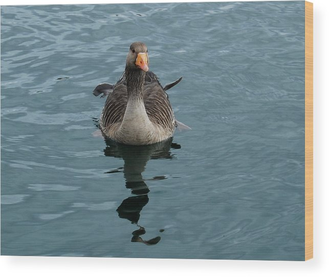 Goose Wood Print featuring the photograph Ruffled Feathers by Marilynne Bull
