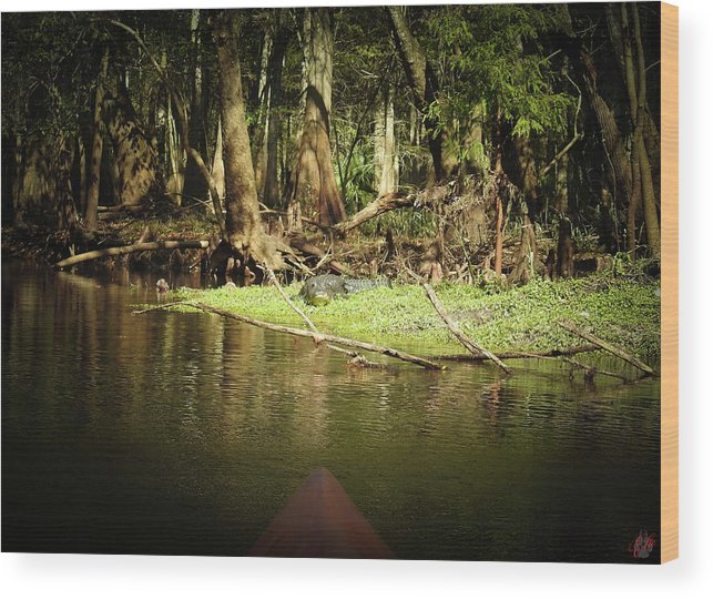 Nature Wood Print featuring the photograph Scenes From A Kayak, No. 15 by Elie Wolf