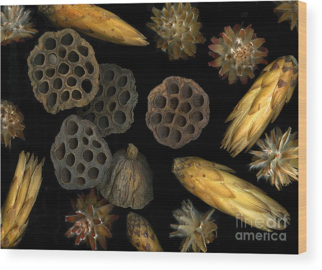 Pods Wood Print featuring the photograph Seeds And Pods by Christian Slanec