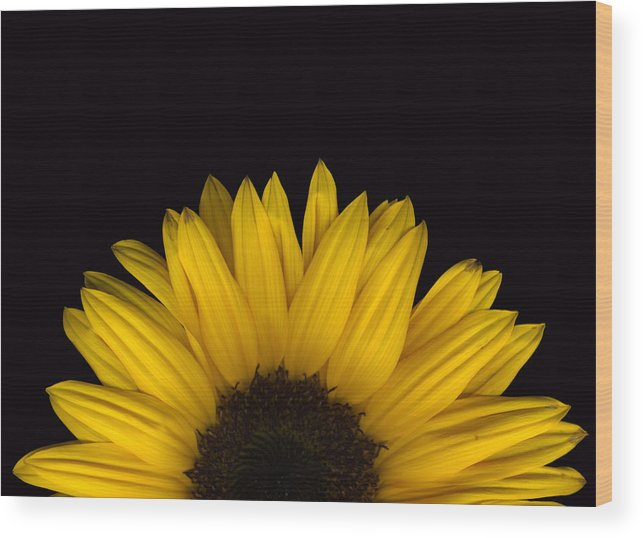 Scanography Wood Print featuring the photograph Sunflower Rising by Deborah J Humphries