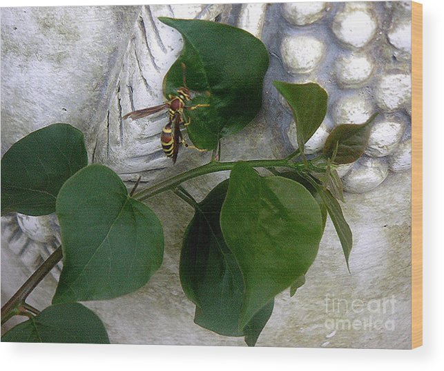 Nature Wood Print featuring the photograph The Visitor by Lucyna A M Green