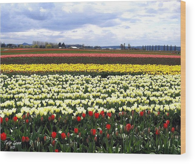 Agriculture Wood Print featuring the photograph Tulip Town 4 by Will Borden