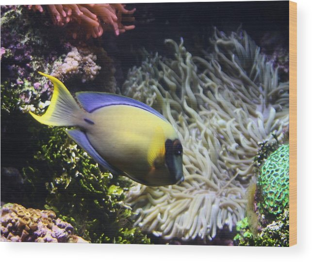 Fish Wood Print featuring the photograph Yellow Fish by Kenna Westerman
