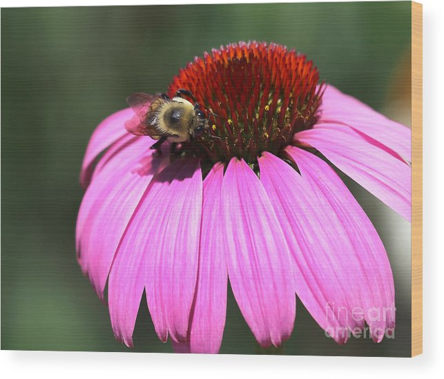 High Line Wood Print featuring the photograph A Bee On The Highline by Steven Spak