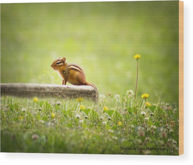Chipmunk Wood Print featuring the photograph Chipmunk by Dianna Wilson