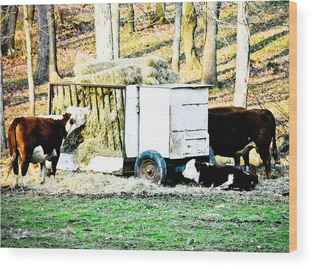 Cows Wood Print featuring the photograph Farm Land by Melinda Pettery