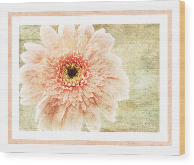 Gerber Wood Print featuring the photograph Gerber Daisy 1 by Andee Design