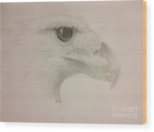 Harpy Eagle Wood Print featuring the drawing Harpy Eagle Study by K Simmons Luna