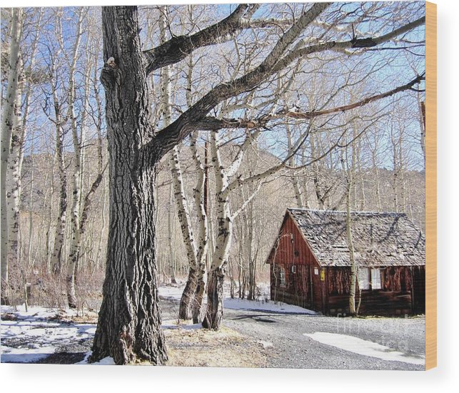 Peaceful Wood Print featuring the photograph Peaceful Living by Marilyn Diaz