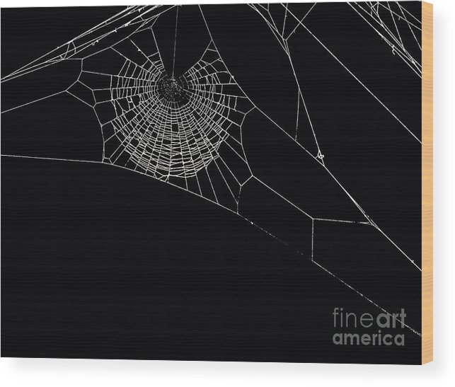 Background Wood Print featuring the photograph Spider's Web by Sinisa Botas