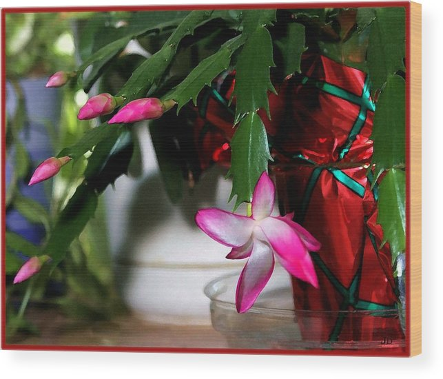 Cactus Wood Print featuring the photograph The Christmas Cactus by Jim Darnall