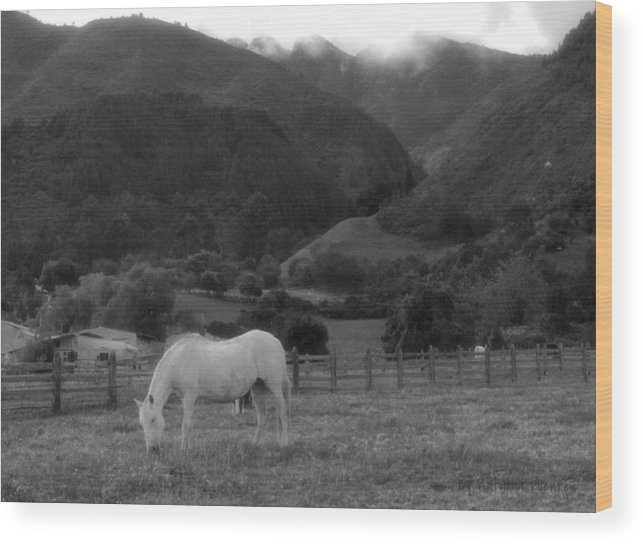 Wood Print featuring the photograph White Horse by Katalina Fuentes