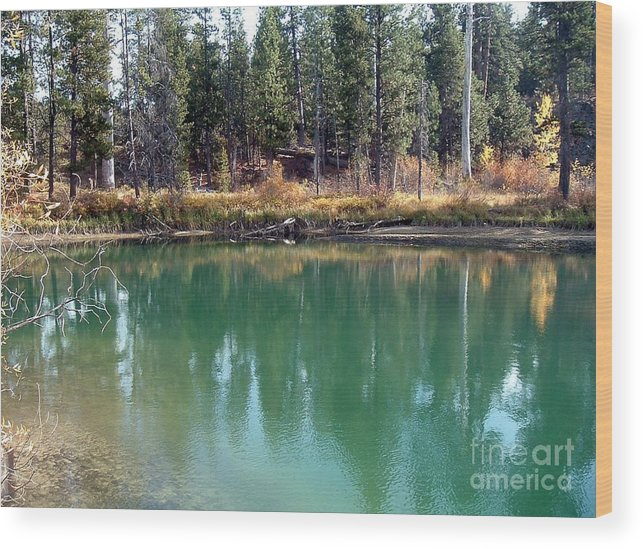 Autumn Wood Print featuring the photograph Autumn View by Erica Hanel