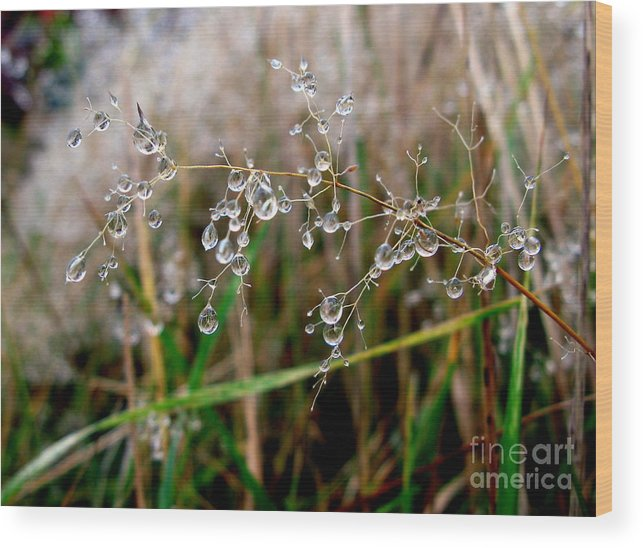 Droplets Wood Print featuring the photograph Droplets On Grass by John Chatterley