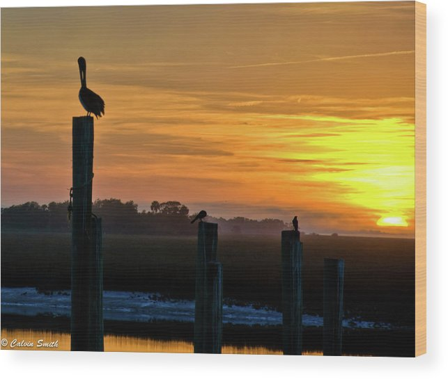 Chas Wood Print featuring the photograph Pelican Sunset by Calvin Smith