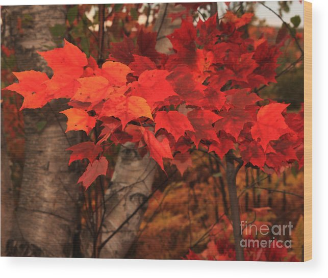 Autumn Wood Print featuring the photograph The True Beauty Of Autumn by Marjorie Imbeau