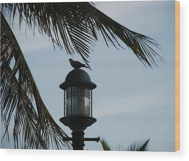 Lamp Post Wood Print featuring the photograph Bird On A Light by Rob Hans