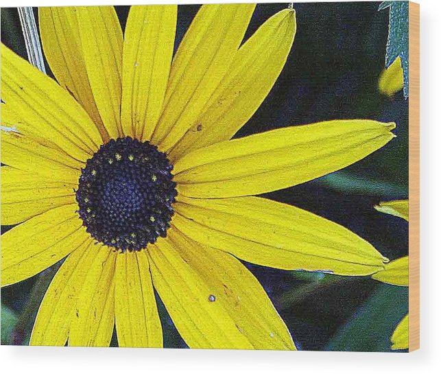 Pictures Of Washington State Wood Print featuring the photograph Black Eyed Susan by Wendy Raatz Photography