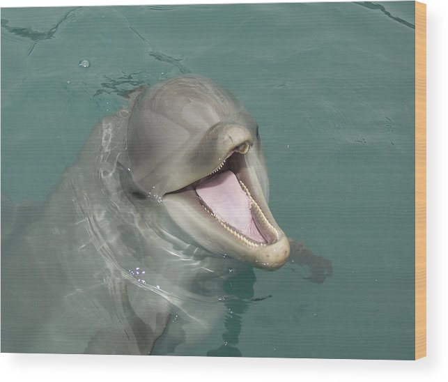 Dolphin Wood Print featuring the painting Dolphin by Sean M