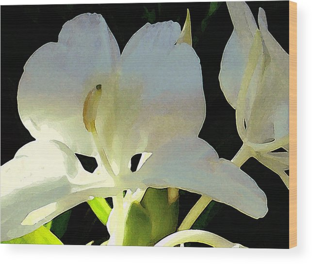 Ginger Wood Print featuring the photograph Fragrant White Ginger by James Temple