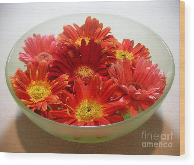 Nature Wood Print featuring the photograph Gerbera Daisies - A Bowl Full by Lucyna A M Green