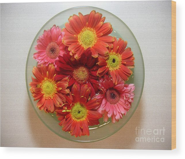 Nature Wood Print featuring the photograph Gerbera Daisies - From Above by Lucyna A M Green