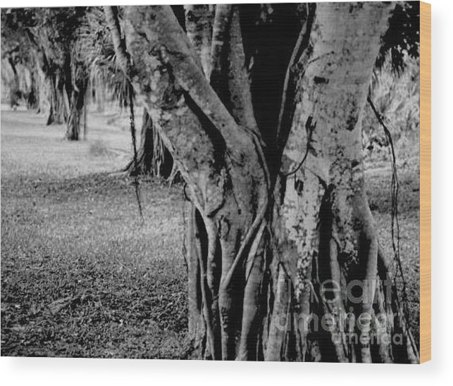 Tree Wood Print featuring the photograph Gnarly Nature by Vicki Lynn Sodora