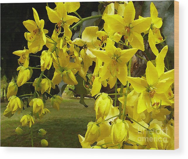 Yellow Shower Tree Wood Print featuring the photograph Golden Shower Tree by James Temple