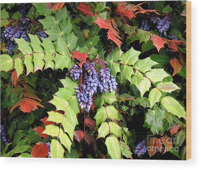Nature Wood Print featuring the photograph Grapes With Leaves - Too by Lucyna A M Green