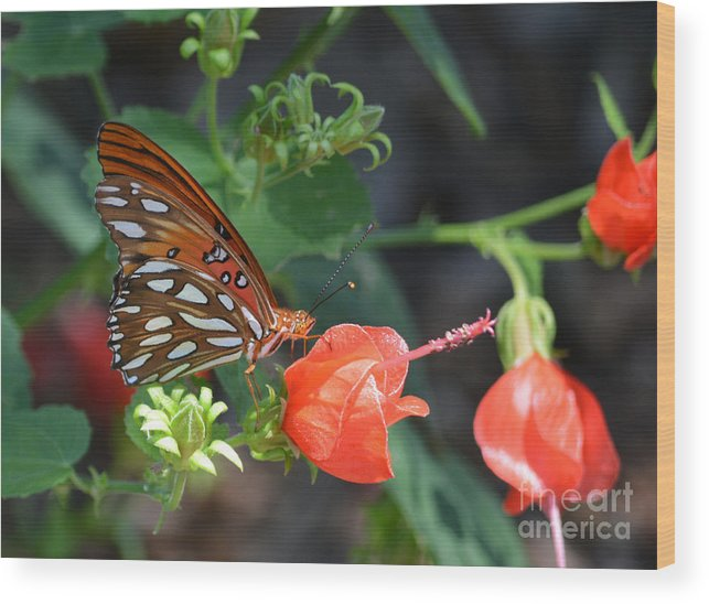 Gulf Fritillary Butterfly On Beautiful Flowers Prints Wood Print featuring the photograph Gulf Fritillary Butterfly On Beautiful Flowers by Ruth Housley