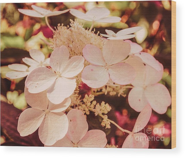 Flower Wood Print featuring the photograph Hydrangeas 7 by Andrea Anderegg