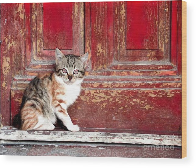 Animal Wood Print featuring the photograph Kitten By Red Door by Tarisa Smith