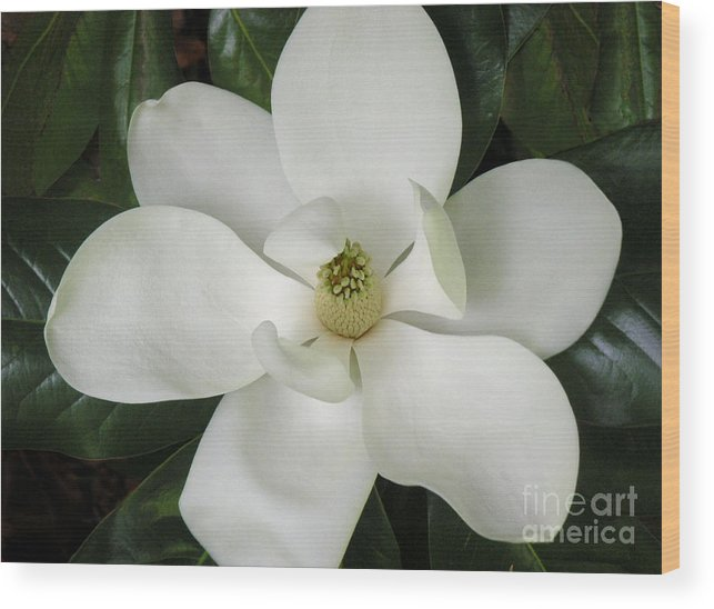 Nature Wood Print featuring the photograph Magnolia In Full Bloom by Lucyna A M Green