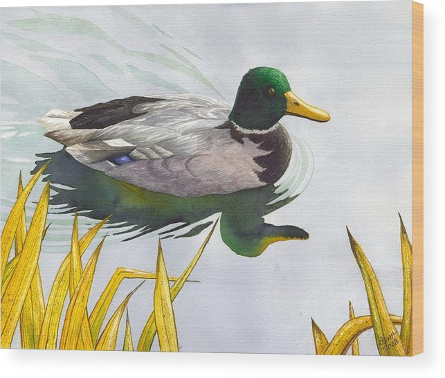 Duck Wood Print featuring the painting Mallard by Catherine G McElroy