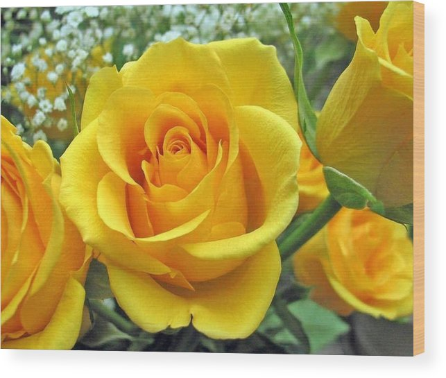Perfect yellow rose wood print by sharon duguay rose wood print featuring the photograph perfect yellow rose by sharon duguay mightylinksfo