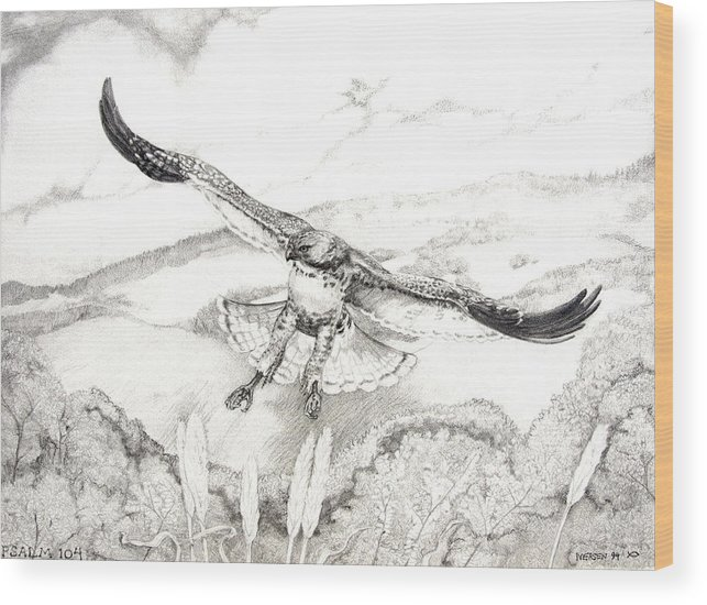 Red-tailed Hawk Wood Print featuring the drawing Red-tailed Hawk Of Psalm 104 by Jill Iversen