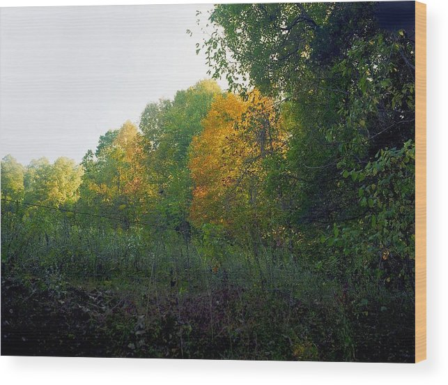 Autumn Wood Print featuring the photograph Sand Gap Hillside by George Ferrell