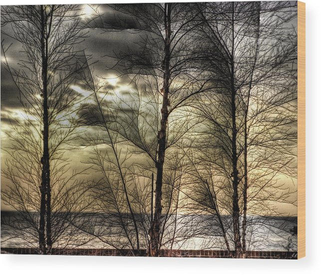 Hdr Wood Print featuring the photograph Three Trees by E R Smith