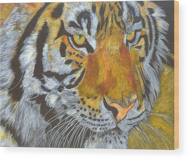 Tiger Wood Print featuring the drawing Tigress by Angela  Cater