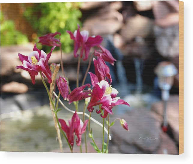 Flower Wood Print featuring the photograph Waterfall And Columbine I - Pride Of Colorado by Christine S Zipps