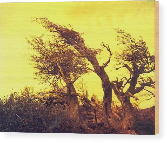 Trees Wood Print featuring the photograph Wicked Trees by Linda Russell