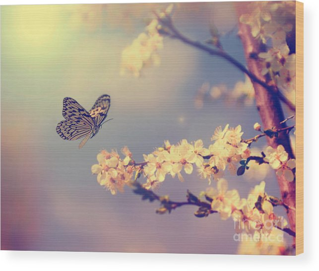 Beauty Wood Print featuring the photograph Vintage Butterfly And Cherry Tree by Dark Moon Pictures