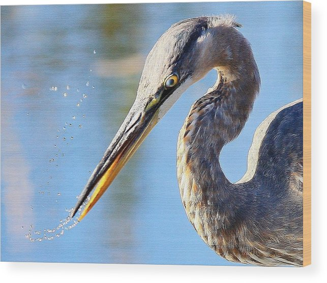 Great Blue Heron Wood Print featuring the photograph A Near Miss by Donald Cramer