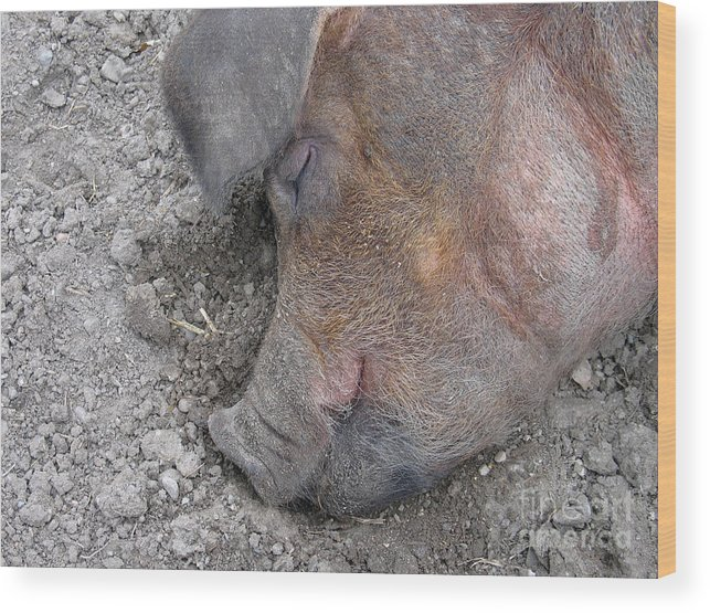 Pig Wood Print featuring the photograph Big Dreamer by Ann Horn