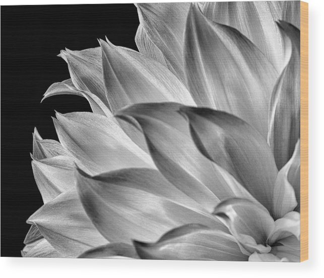 Dahlia Wood Print featuring the photograph Black And White Dahlia by Georgette Grossman