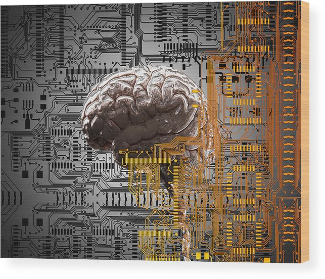 Internet Wood Print featuring the drawing Brain Under Layers Of Circuit Board, by John M Lund Photography Inc