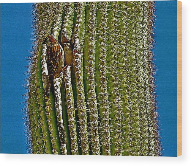 Cactus Wren With Offspring Wood Print featuring the photograph Cactus Wren With Offspring In A Saguaro Cactus In Tucson Sonoran Desert Museum-arizona by Ruth Hager
