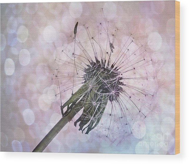 Photography Wood Print featuring the photograph Dandelion Before Pretty Bokeh by Kaye Menner